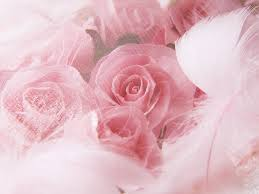pinkl_roses_and_feathers.jpg